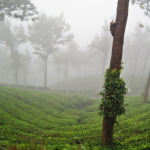 Scenic beauty of  Kerala6